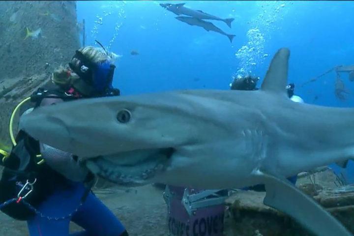 360 Underwater Livestream
